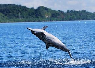 dolphin_watching7